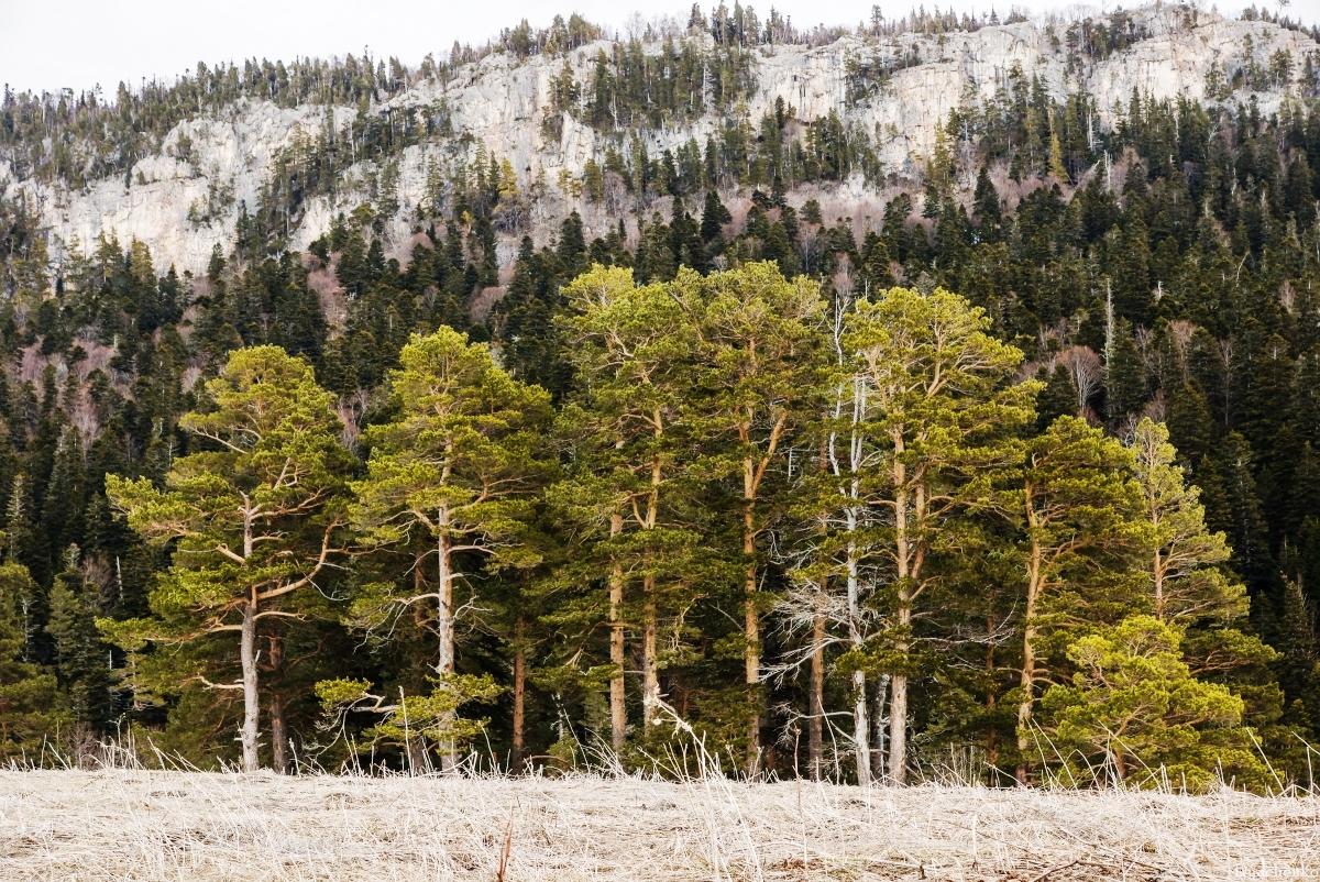 Так выглядит лес, в котором сосны старше 200 лет